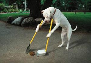pies sprzątający za sobą
