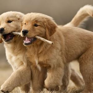 Psie przedszkole w Krakowie - Szkolenie Happy Puppy