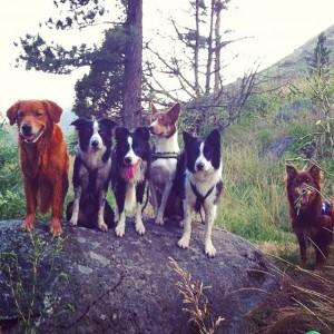 super zdjęcie kilku psów