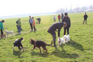 Grupowe szkolenie psów w Krakowie