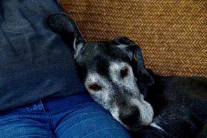 Oswajanie psa z dotykiem