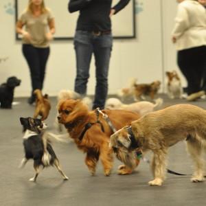 Szkolenie szczeniaka - Psi-ekspert