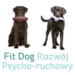 Tresura psów Kraków
