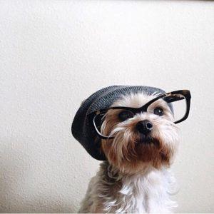 agencja castingowa psów i kotów