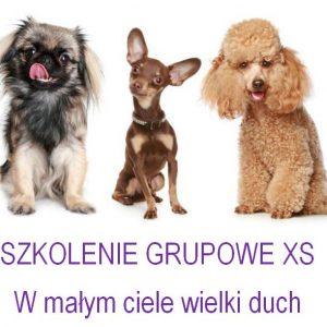Szkoła dla psów Kraków