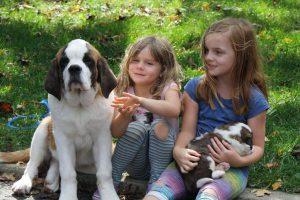Przygotuj psa na dziecko - kilka zasad