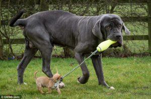 instrukcja-obslugi-psa