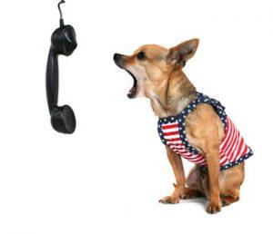 Mowa psa - jak komunikować się z psem?