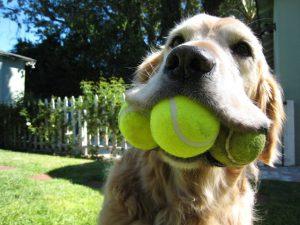 Jak interpretować zachowanie psa?