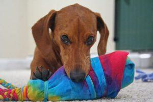 Co oznacza konkretne zachowanie psa?