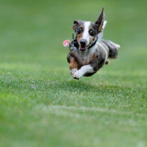Jak nauczyć psa przychodzenia na każde zawołanie?