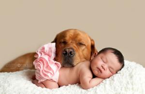 Jak przygotować psa na dziecko?