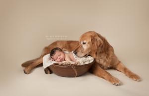 Jak przygotować psa na pojawienie się dziecka?