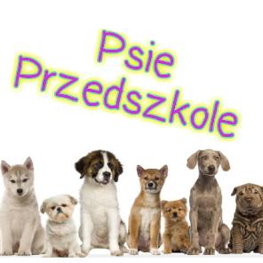 Psie Przedszkole Kraków
