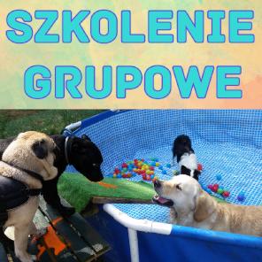 Szkolenia grupowe dla psów Kraków