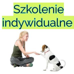 Szkolenia indywidualne dla psów Kraków